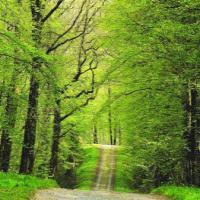 Footing en forêt verte