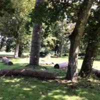 Pause nature et méditation